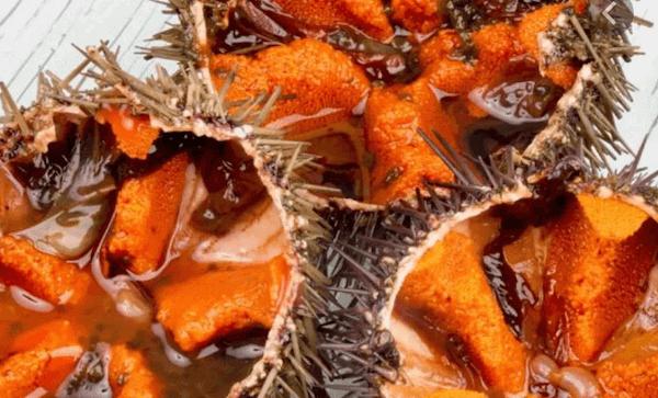Cómo Cocer Oricios